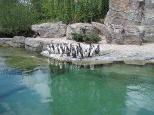 Pinguin-Anlage Frankfurter Zoo